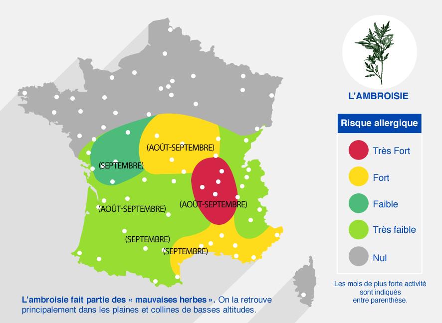 carte des risques allergiques dûs à l'ambroisie. Très fort dans la région Rhône-Alpes (de août à septembre). Fort en PACA et région centre. Faible dans le reste de la France en-dessous de la Loire. Inexistant au-dessus de la Loire.