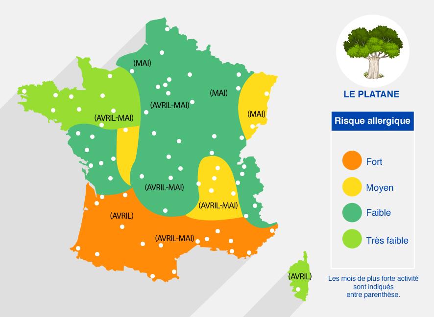carte des risques allergiques dûs au platane. Fort dans le sud (de avril à mai). Moyen sur l'Alsace, le Rhône-alpes. Faible dans le reste de la France.