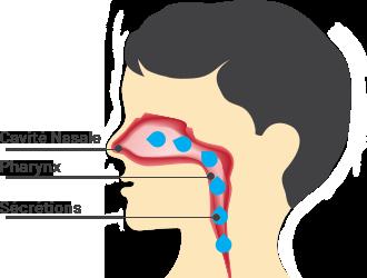 schéma de la cavité nasale, du pharynx et des sécrétions nasales qui retombent dans la gorge